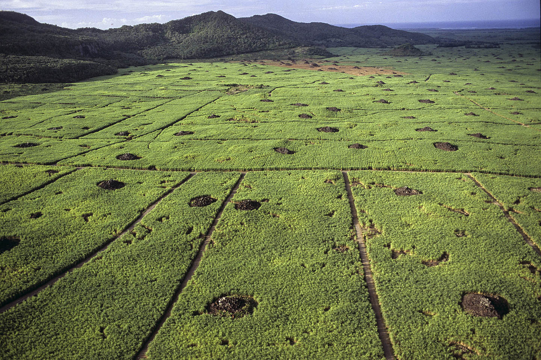 Mauritius island. Aerial view of sugar cane fields